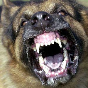 vicious-dog-attack